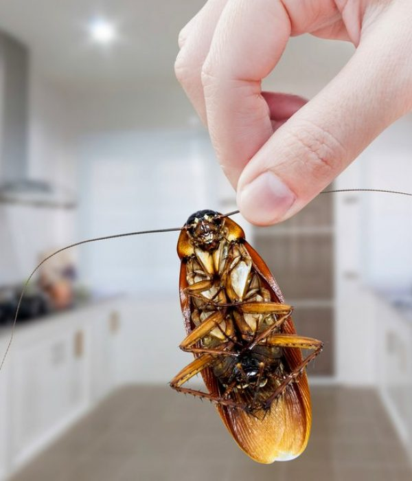 blattes-cafards-2