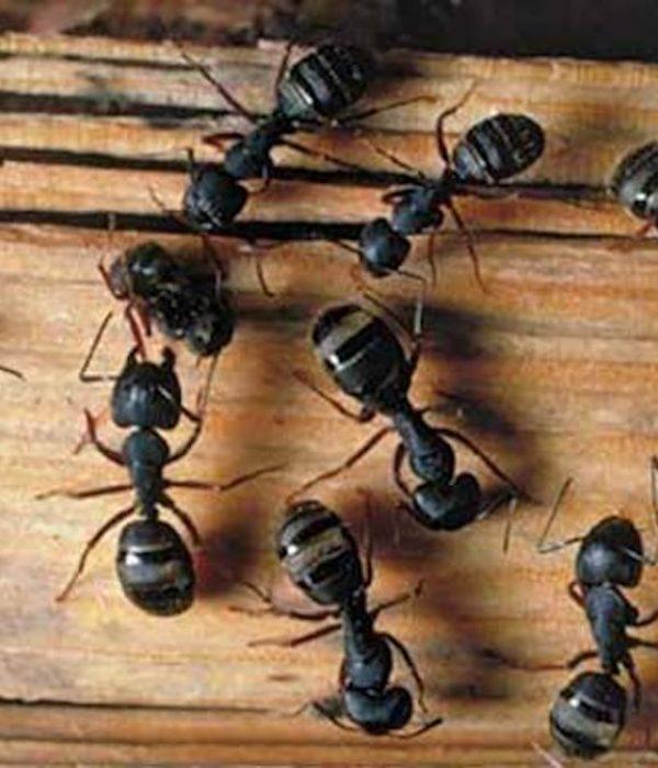 chasser-fourmis-maison-car.jpg-6048